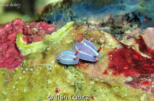 Nudi Family by Ilan Lubitz 